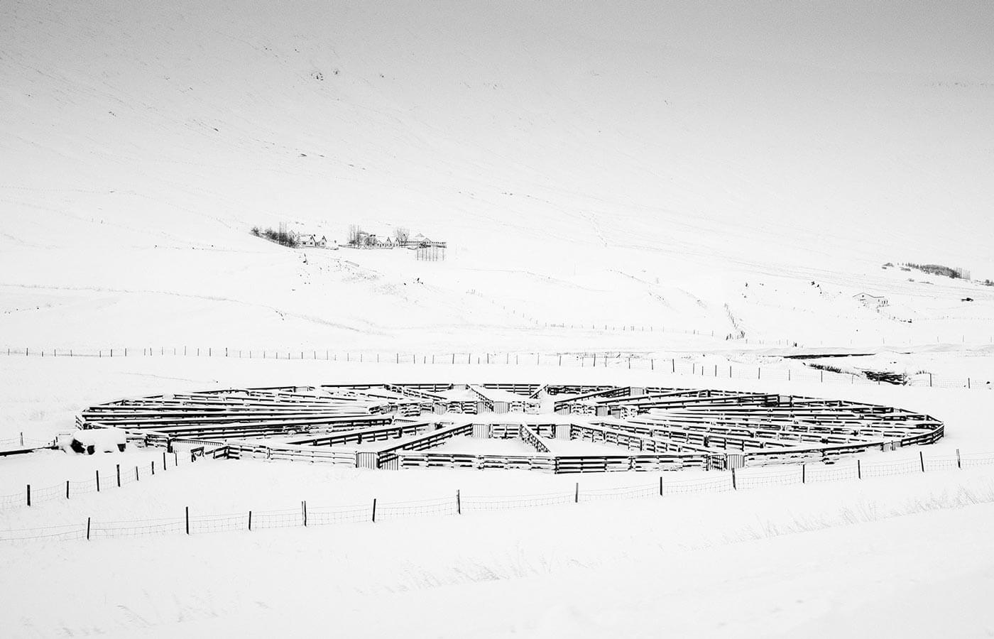 circle lamb fence in the snowy winter