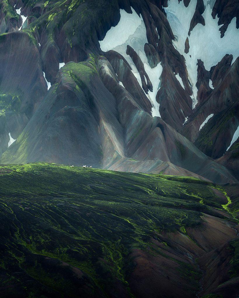Icelandic sheep in mountain terrain